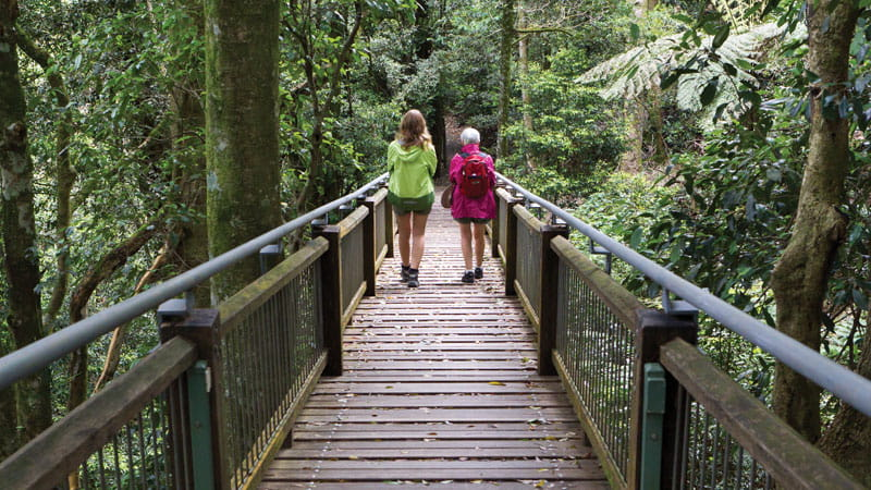 Two people walking on the Wonga walk boardwalk. Photo: Rob Cleary