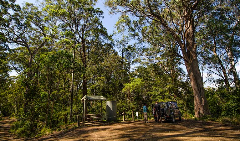 Lagoon Pinch picnic area, Barrington Tops National Park. Photo: John Spencer/NSW Government
