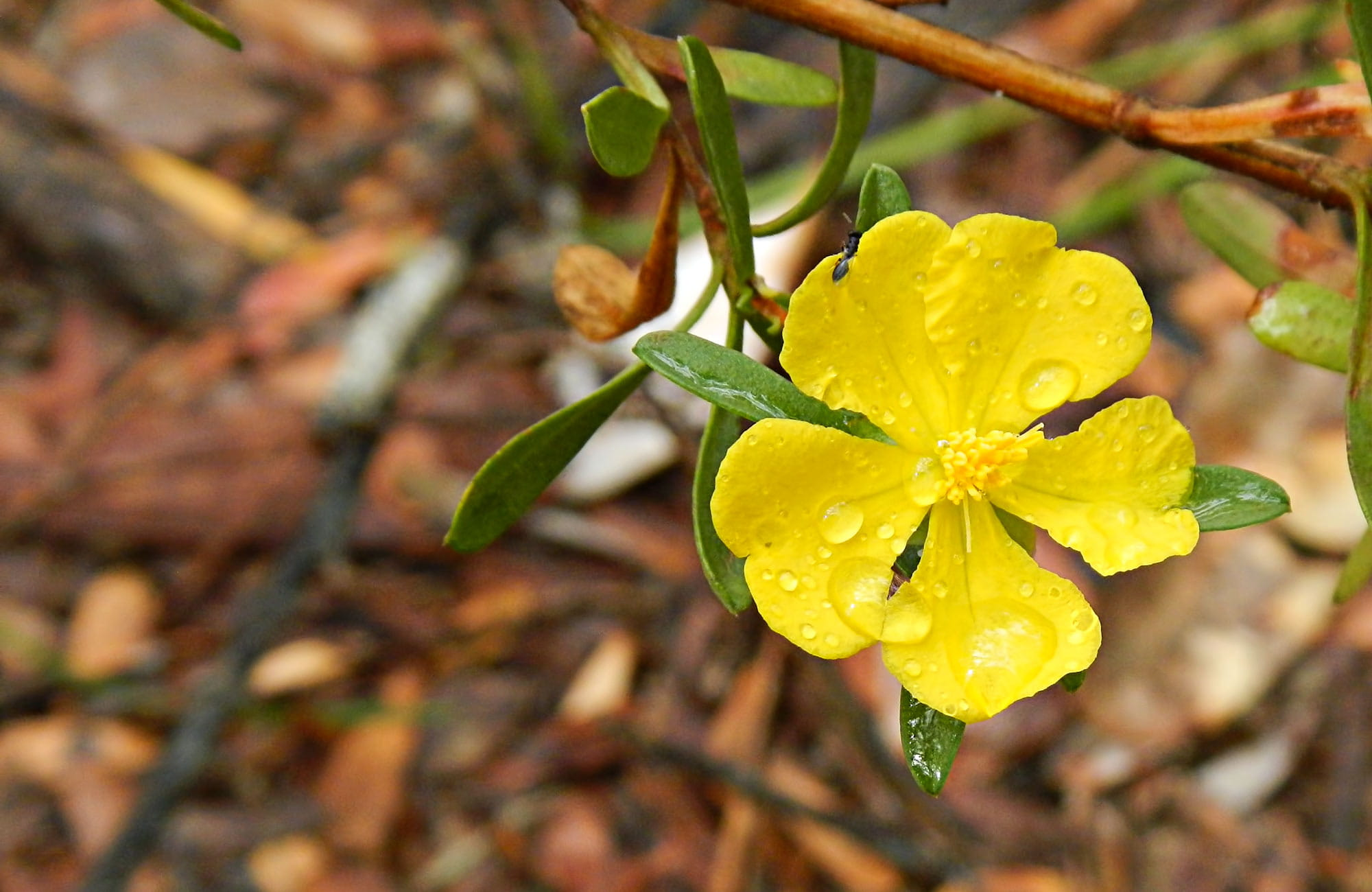 Yellow Flower. Photo: Debby McGerty