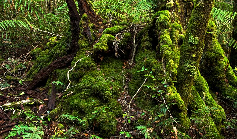 Moss covered stump. Photo:John Spencer Copyright:NSW Government