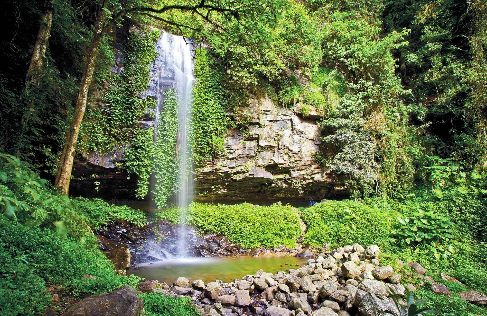 Volunteer Work Dorrigo Rainforest Centre Nsw National Parks