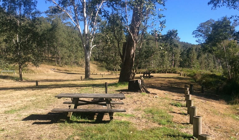 Picnic area in Doon Goonge campground, Chaelundi National Park. Photo: Andrew Pitzen/OEH
