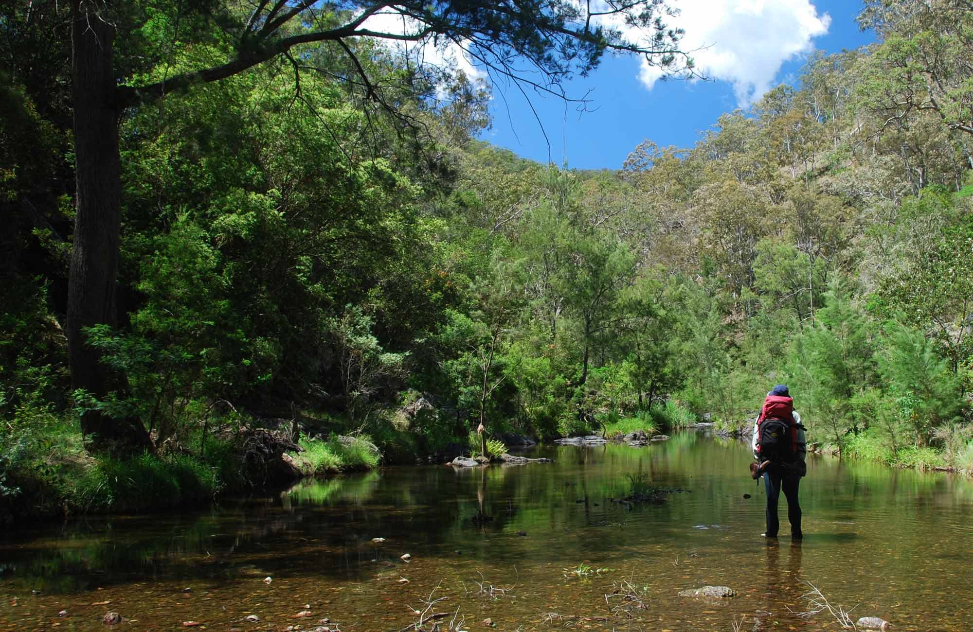 Green Gully Track, Oxley Wild Rivers National Park. Photo: Shane Rumming