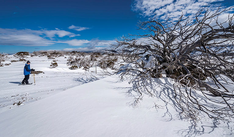 Cross-country skiing in Perisher, Kosciuszko National Park. Photo: John Spencer/OEH