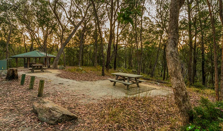 Boonoo Boonoo Falls picnic area, Boonoo Boonoo National Park. Photo: David Young Copyright: NSW Government