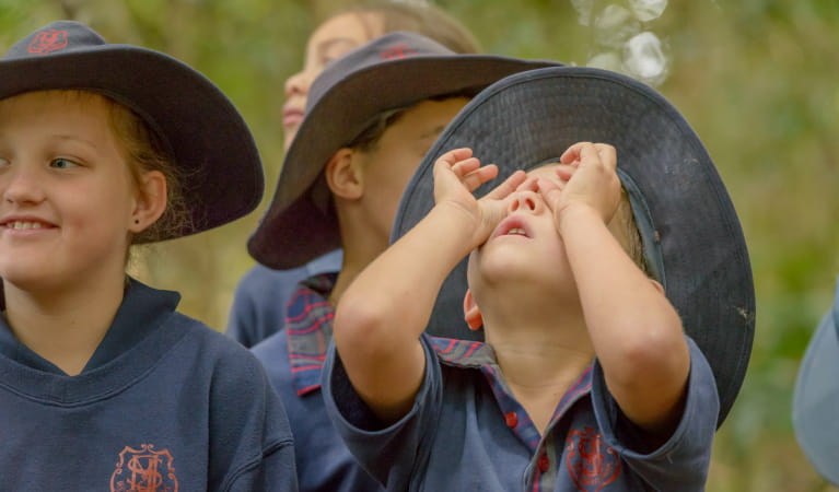 WilderQuest school excursion in Dorrigo National Park. Photo: John Spencer/OEH