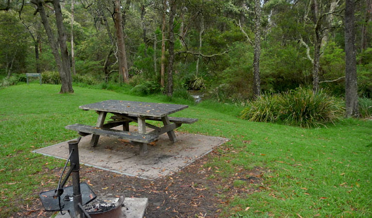 Chaelundi Campground, Guy Fawkes River National Park. Photo: NSW Government