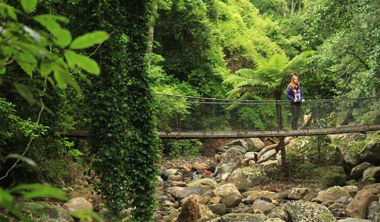 Person crossing a bridge over a creek, Rainforest Loop walk. Photo: Andy Richards