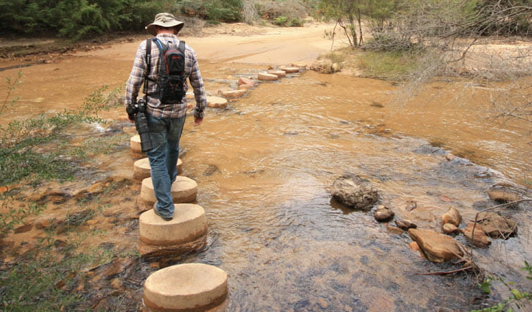 Man rock hopping on foot across Wolgan River, Newnes Industrial Ruins, Wollemi National Park. Photo: Elinor Sheargold