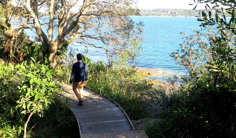 Along the boardwalk of the Hermitage Foreshore track, Sydney Harbour National Park. Photo: Elinor Sheargold/OEH