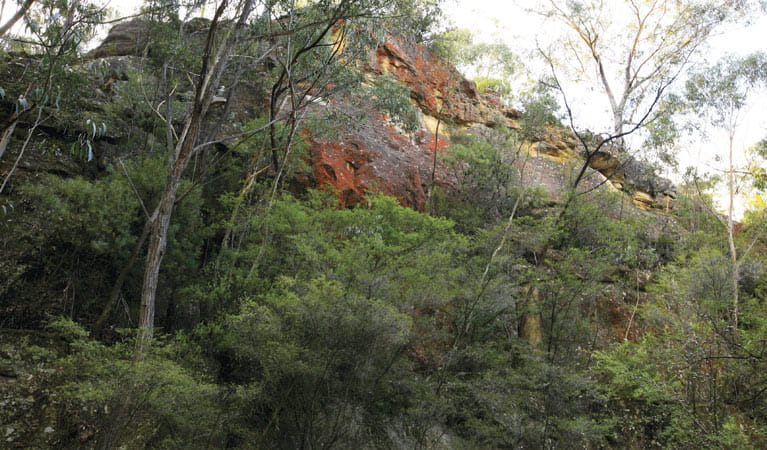Rhodophyta, Gardens of Stone National Park, Monundilla Sector of the Greater Blue Mountains World Heritage Area. Photo: R Nicolai/NSW Government