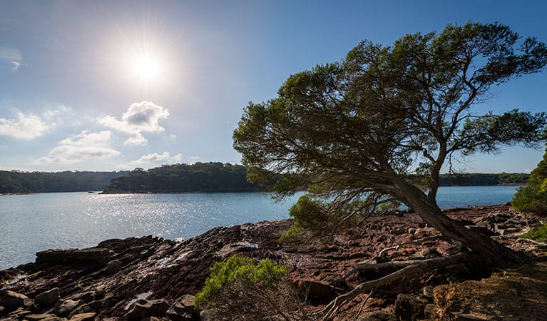 Bittangabee Bay to Green Cape walking track, Ben Boyd National Park. Photo: John Spencer