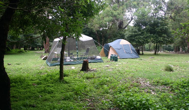 Tents, trees and grass in Bittangabee campground. Photo: David Costello