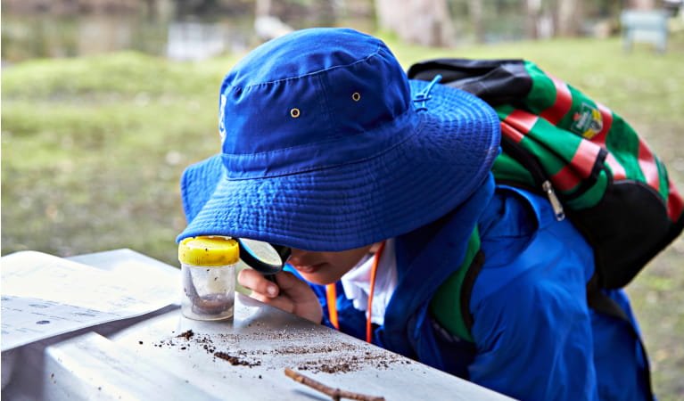 Student investigating plants and animals on a school excursion in Royal National Park. Photo: Tanja Bruckner