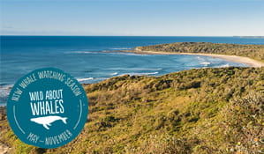 Angouire walking track in Yuraygir National Park. Photo: Rob Cleary/OEH