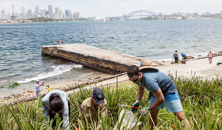 Corporate volunteers participating in bush regeneration, Sydney Harbour National Park. Photo: David Finnegan