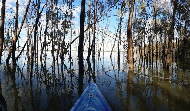 View from a kayak among tree trunks in Yanga Lake. Photo: Martin Kendall/OEH