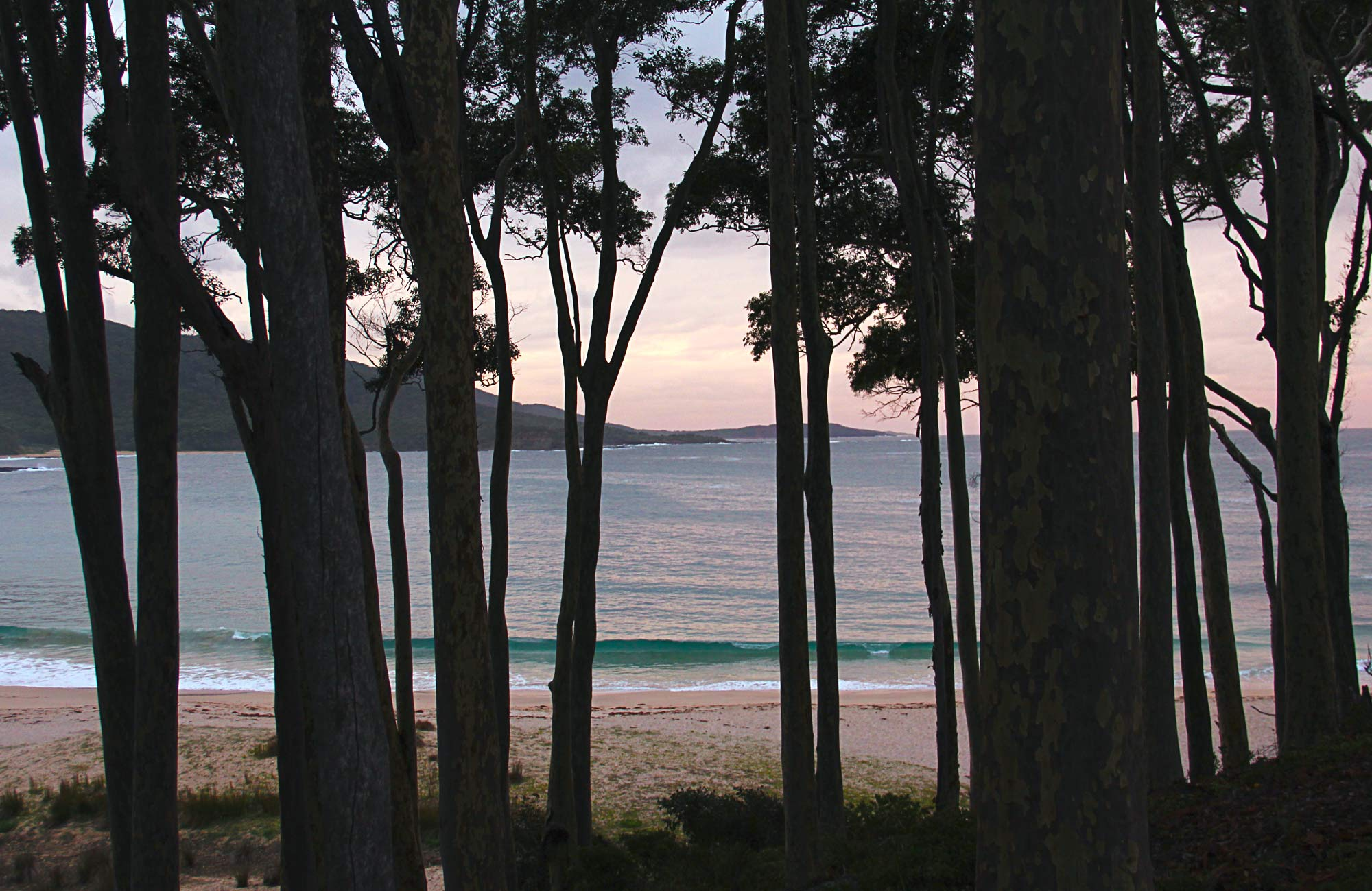 Looking through the trees out to sea on sunset. Photo:John Yurasek