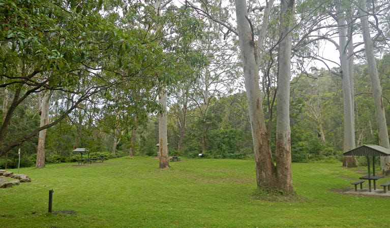 Carter Creek picnic area, Lane Cove National Park. Photo: Debby McGerty