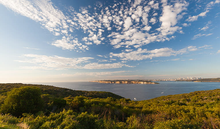 Photo of harbour view from North Head, Sydney Harbour National Park. Photo: David Finnegan