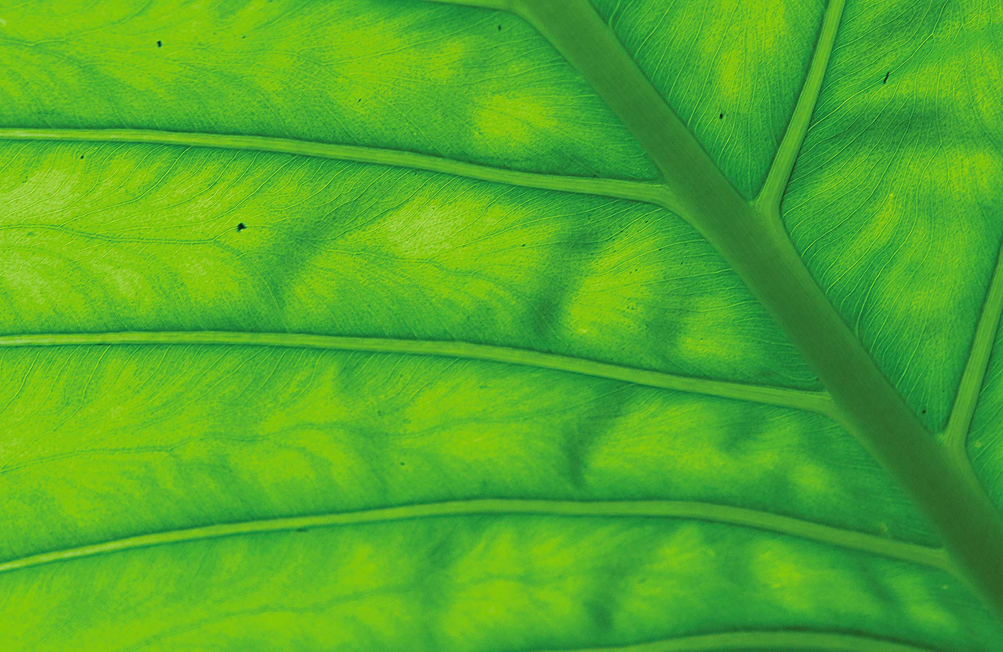 Green leaf. Photo:Rob Cleary