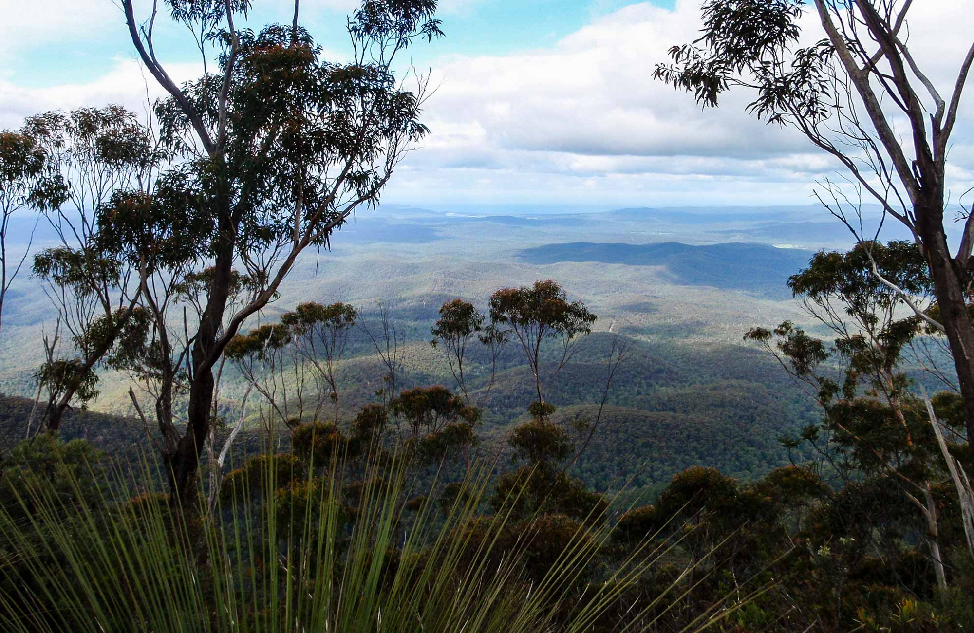 Mount Imlay National Park. Photo: NSW Government