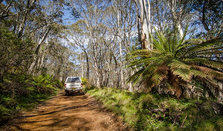 A vehicle on the Barrington Trail. Photo:John Spencer Copyright:NSW Government.