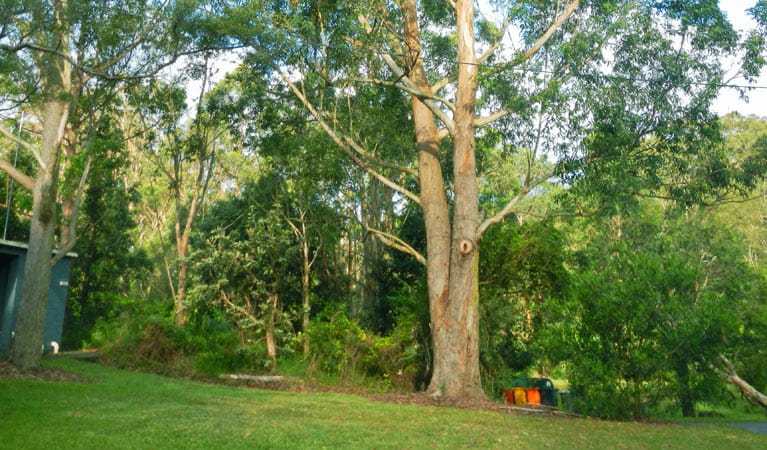Casuarina Point picnic area, Lane Cove National Park. Photo: Debbie McGerty