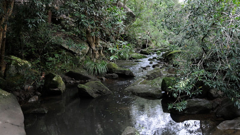 Lane Cove River, Lane Cove National Park. Photo: Kevin McGrath