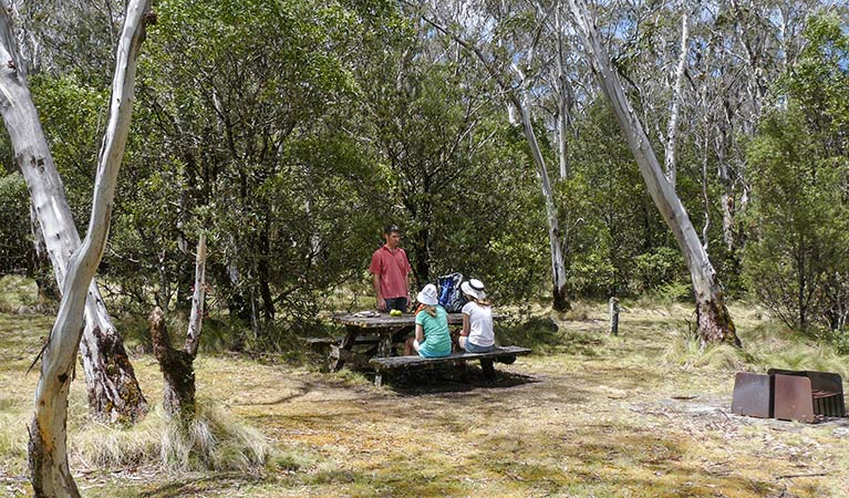 Berarngutta picnic area, New England National Park. Photo: Barbara Webster